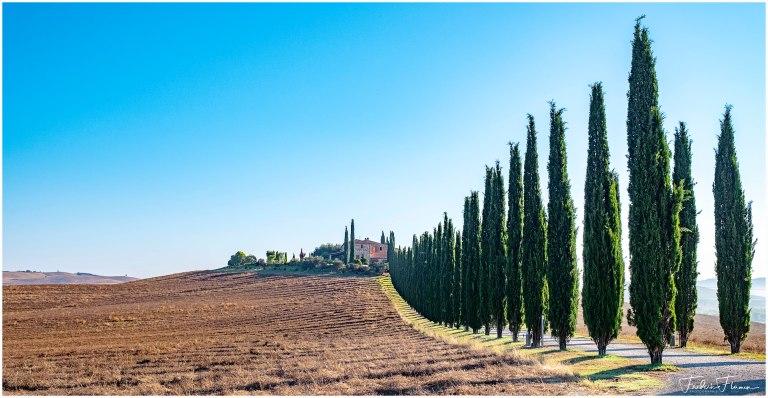 Cypres Toscane